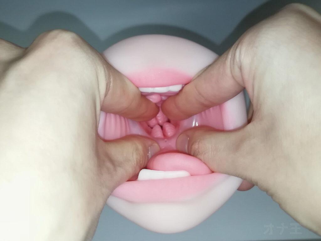 NUPUの口側の内部構造