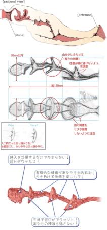 ドルフィンの内部設計図